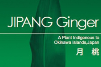 JIPANG Ginger